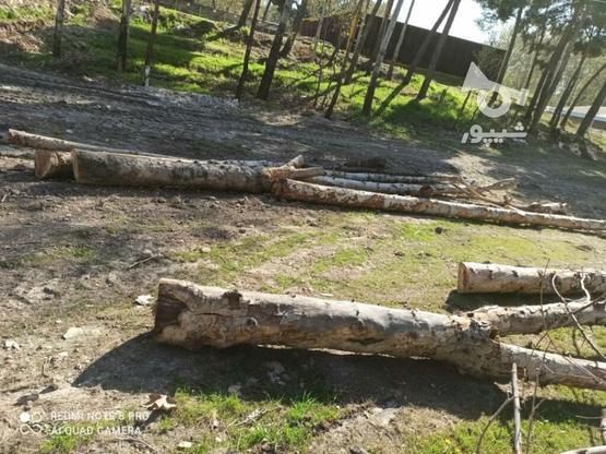 خریدار چوب در گروه خرید و فروش خدمات و کسب و کار در تهران در شیپور-عکس3