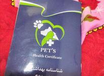 توله سگ باهوش در شیپور-عکس کوچک