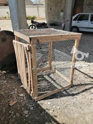 گنجه. قفسه نو 2 لایه طور و راویز زده  در گروه خرید و فروش ورزش فرهنگ فراغت در مازندران در شیپور-عکس1
