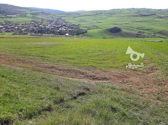 فروش یک قطعه زمین در گرنام هزار جریب در گروه خرید و فروش املاک در مازندران در شیپور-عکس1