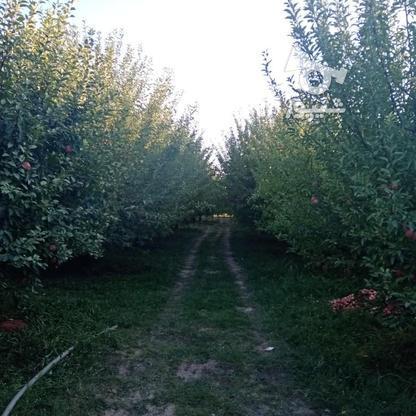 فروش زمین کشاورزی 3000 متر در مهاباد در گروه خرید و فروش املاک در آذربایجان غربی در شیپور-عکس3