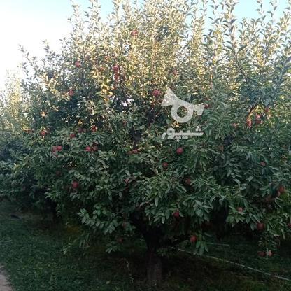 فروش زمین کشاورزی 3000 متر در مهاباد در گروه خرید و فروش املاک در آذربایجان غربی در شیپور-عکس2