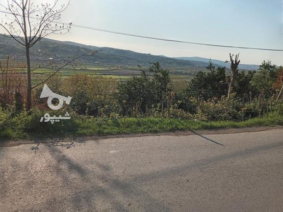 1000 متر رو به تجن ابتدای علویکلا در گروه خرید و فروش املاک در مازندران در شیپور-عکس4