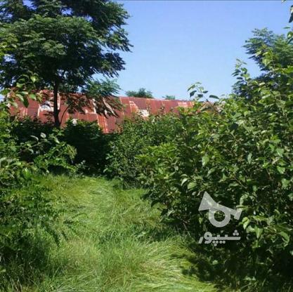 فروش زمین باغ بالای 2500 متر در شهر شلمان در گروه خرید و فروش املاک در گیلان در شیپور-عکس1