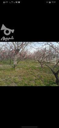 28000 متر درخت های عالی  در گروه خرید و فروش املاک در تهران در شیپور-عکس6