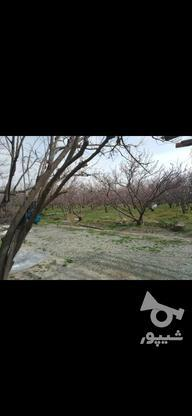 28000 متر درخت های عالی  در گروه خرید و فروش املاک در تهران در شیپور-عکس5