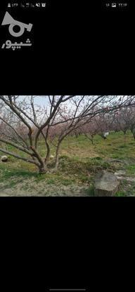 28000 متر درخت های عالی  در گروه خرید و فروش املاک در تهران در شیپور-عکس7