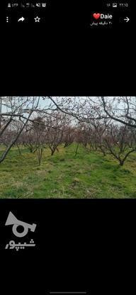28000 متر درخت های عالی  در گروه خرید و فروش املاک در تهران در شیپور-عکس4