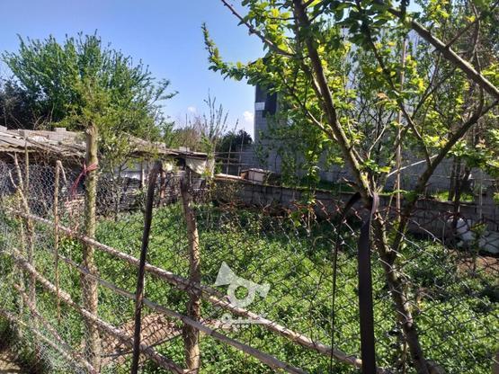زمین مسکونی 211 متری در روستای جنید در گروه خرید و فروش املاک در مازندران در شیپور-عکس7
