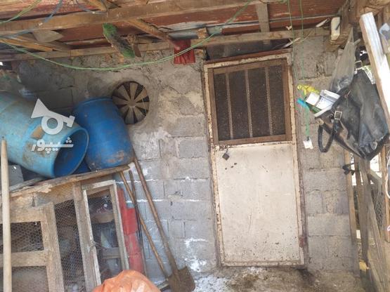 زمین مسکونی 211 متری در روستای جنید در گروه خرید و فروش املاک در مازندران در شیپور-عکس6