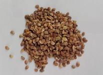 فروش بذر اسپرس یا خشه یونجه در شیپور-عکس کوچک