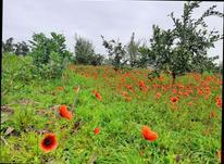 زمین باغی  264 متر  در شیپور-عکس کوچک