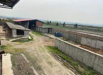 فروش و معاوضه دامداری صنعتی3200متری در شیپور-عکس کوچک