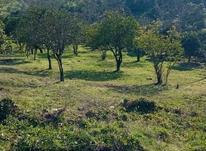 3300 متر زمین مسکونی در منطقه دنج و فوق العاده زیبای املش در شیپور-عکس کوچک