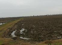 فروش زمین کشاورزی 10000 متر در بهنمیر در شیپور-عکس کوچک