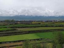 بافت مسکونی صدرصد 345متر  در شیپور
