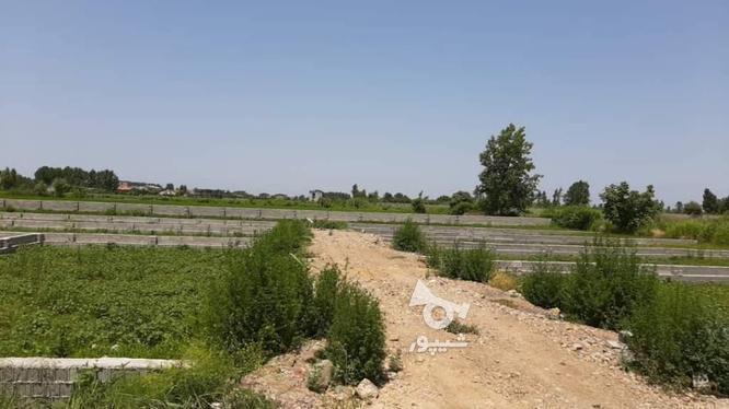 فروش زمین مسکونی 328  در گروه خرید و فروش املاک در مازندران در شیپور-عکس1