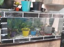 آکواریوم شیک در شیپور-عکس کوچک