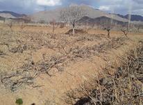 باغ انگور و زمین کشاورزی  در شیپور-عکس کوچک