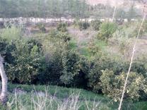 فروش باغ 3500 متر . شیرگاه در شیپور
