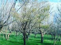 باغ در روستای مونق در شیپور-عکس کوچک