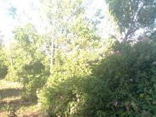 باغ و زمین با شرایط عالی در بهترین نقطه اولان  در شیپور