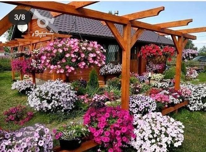خدمات باغبانی حرفه ای در گروه خرید و فروش خدمات و کسب و کار در مازندران در شیپور-عکس2