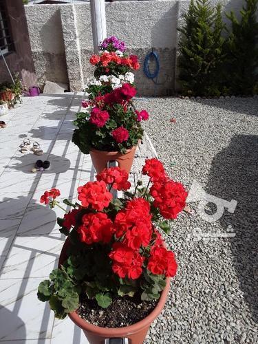 خدمات باغبانی حرفه ای در گروه خرید و فروش خدمات و کسب و کار در مازندران در شیپور-عکس1