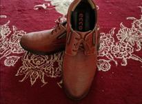 کفش مجلسی سایز42_41 در شیپور-عکس کوچک