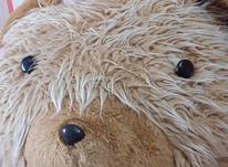 خرس بسیار بزرگ  در شیپور-عکس کوچک