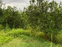 باغ 1150 متری مناسب برای سرمایه گذاری منطقه سورک در شیپور