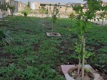 باغبانی وفروش گل وگیاه در شیپور