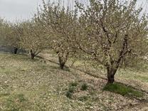 زمین و باغچه دماوند وادان در شیپور