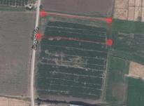 زمین کشاورزی باغی در شیپور-عکس کوچک