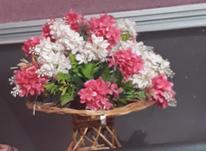 دسته گل بزرگ  نو بهمراه یک گل دیگر زیبا در شیپور-عکس کوچک