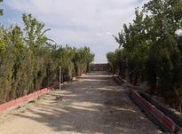 فروش زمین کشاورزی 500 متر در بُکه در شیپور-عکس کوچک