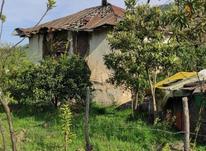 فروش زمین مسکونی 1500 متر در رامسر در شیپور-عکس کوچک