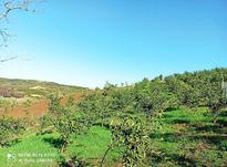 زمین باغی 3,500 متری کوچکسرا روستا کروا  در شیپور-عکس کوچک