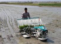 کشت نشا دستگاهی. برنج در شیپور-عکس کوچک