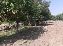1500متر زمین کشاورزی واقع در کرمجگان در شیپور-عکس کوچک