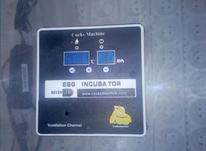 دستگاه جوجه کشی کاکس 42 تایی در شیپور-عکس کوچک