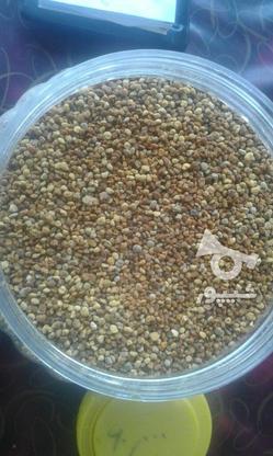 عسل طبیعی و ژل رویال و گرده گل  در گروه خرید و فروش خدمات و کسب و کار در تهران در شیپور-عکس1