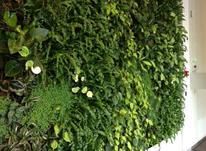 دیوار سبز، دیوار زنده، گرینوال، باغ عمودی در شیپور-عکس کوچک