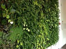 دیوار سبز، دیوار زنده، گرینوال، باغ عمودی در شیپور
