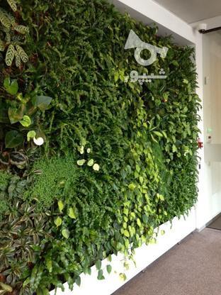 دیوار سبز، دیوار زنده، گرینوال، باغ عمودی در گروه خرید و فروش خدمات و کسب و کار در تهران در شیپور-عکس1
