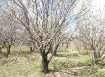 باغ  بهرجاده از طالبخان به خرمازرد در شیپور-عکس کوچک
