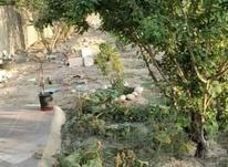 1000متر باغ در جوزدان  در شیپور-عکس کوچک