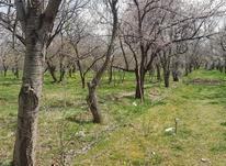 باغ  4100 متر کندلج بر کمربندی  در شیپور-عکس کوچک