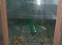 آکواریوم ماهی در شیپور-عکس کوچک