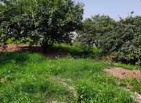فروش زمین مسکونی 1000 متر در کولا در شیپور-عکس کوچک